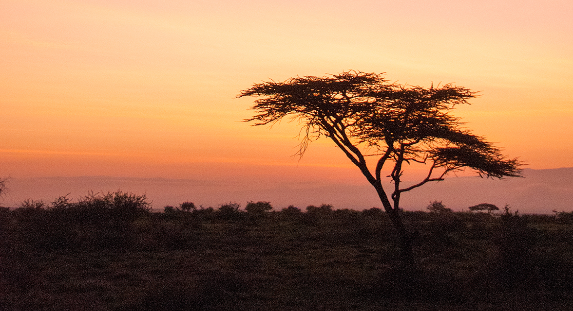 Sunset view of savanna landscape with acacia tree