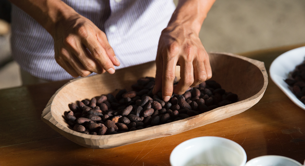 Local Ecuadorian community member examining cacao beans in a bowl
