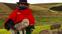 Local woman holding sheep in Ecuador