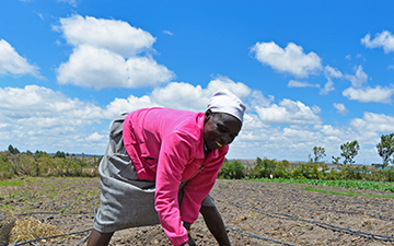 Catherine Chirchir and another farmer work on the Kipsongol Farm.