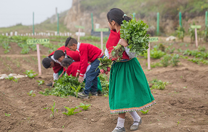 Students helping in school garden in Ecuador
