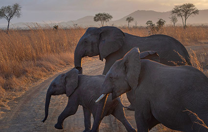 Kenya Safari - herd of young elephants
