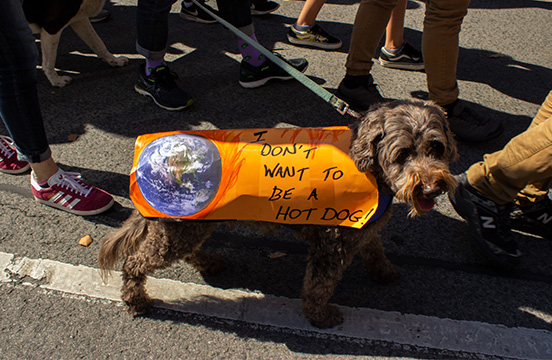 A dog wearing a sign at the climate march.