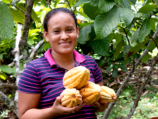 A chocolate farmer holds two yellow cacao pods and smiles at the camera in the middle of a field of cacao trees