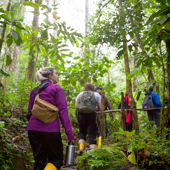 Travellers trekking through rainforest