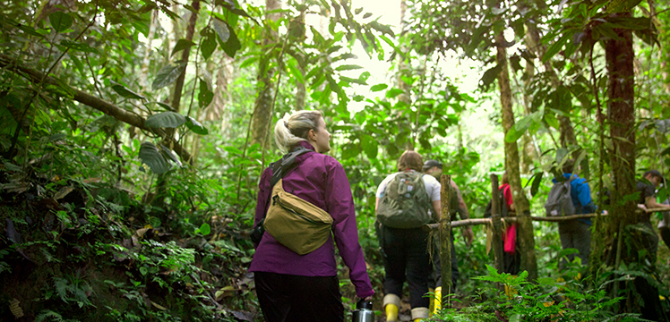 Travellers trekking through the Amazon Rainforest